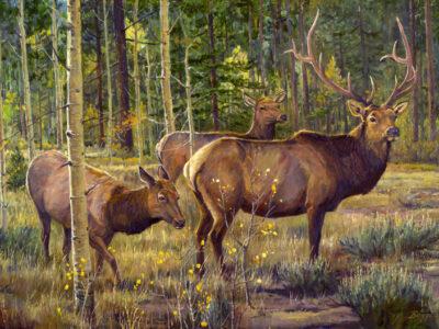 Aspen Elk - FC NEW