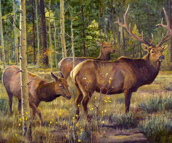 Aspen Elk – FC NEW