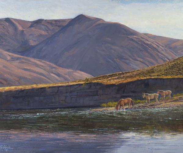 Mustangs on River Gravel Bar