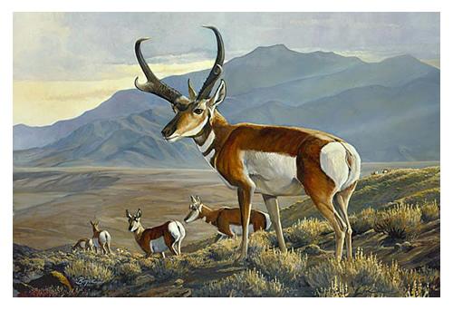 antelope-s