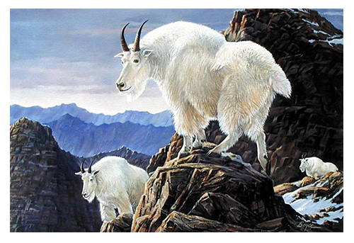 goat-s