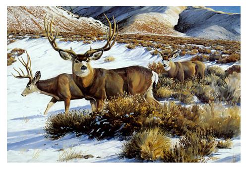 mule_deer-s