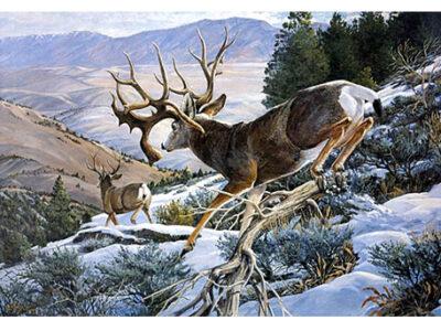 nt_deer-s