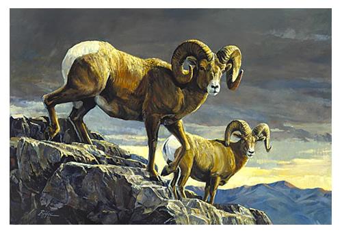 rocky-mtn_sheep-s